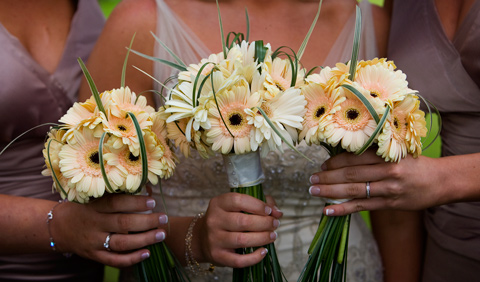 Hand tied bouquet with cafe and cream germinis, china grass and bear grass