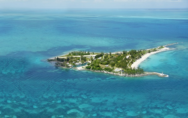 Stag Web Caribbean Island