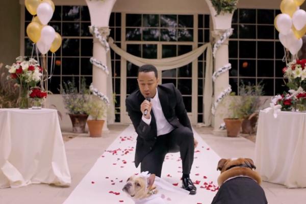 John Legend Dog Wedding