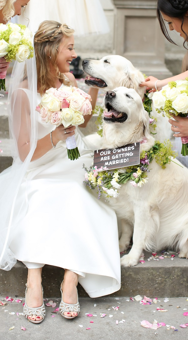 How to include your pet in your wedding 3