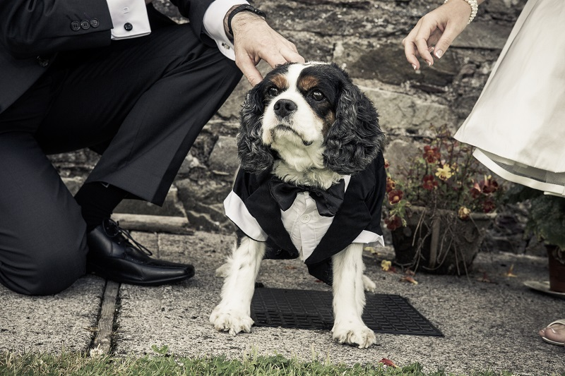 How to include your pet in your wedding 4