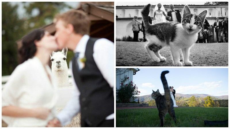 funny wedding photos 3