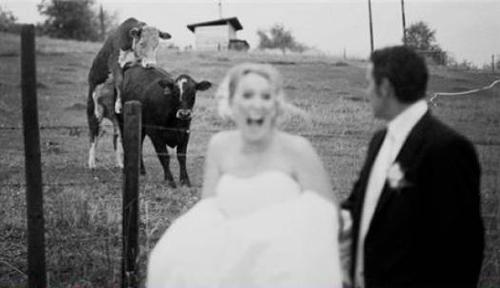 wedding day fails animals
