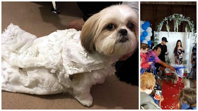 dog wedding 4