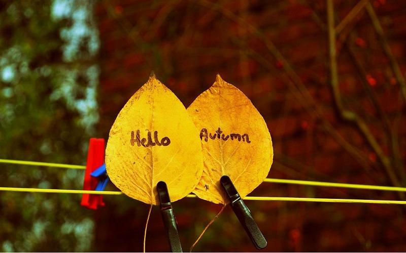 hello-autumn-94e677f6-f3c9-4017-b82b-b33f910d30a1