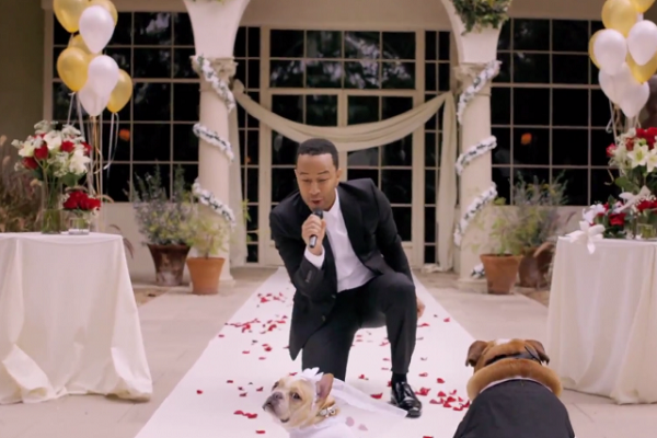 John Legend Dog Wedding