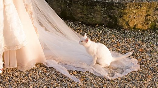 Wedding day fails - misbehaving animals