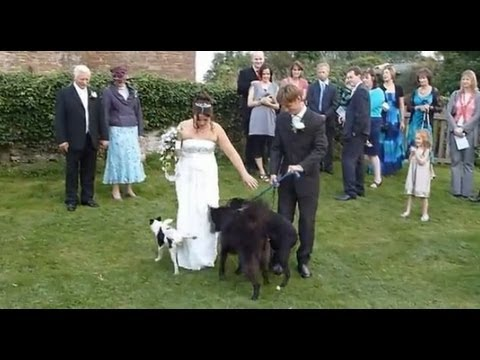 Wedding day fails animals