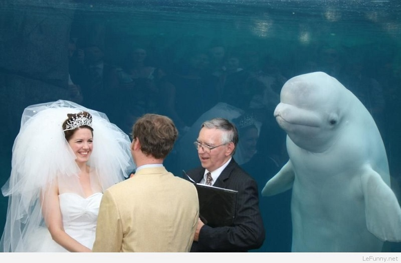 Wedding day fail photobomb