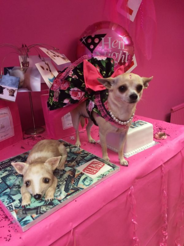 chihuahua has decadent hen do 1