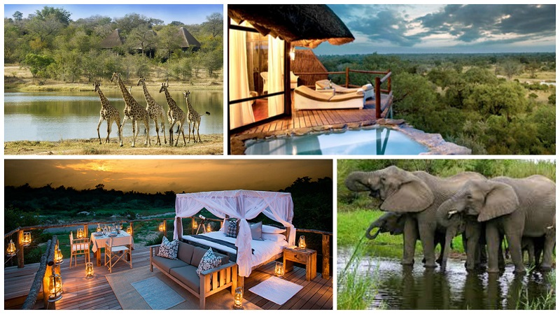 safari honeymoon south africa