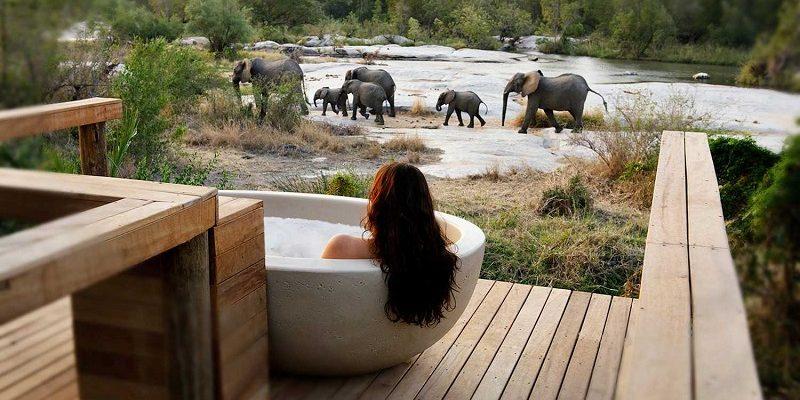 honeymoons in south africa londolozi