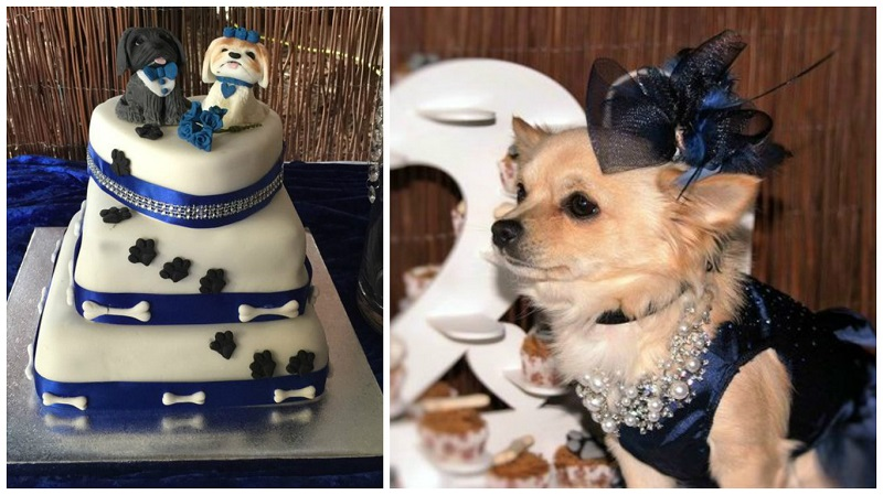 dog wedding 2