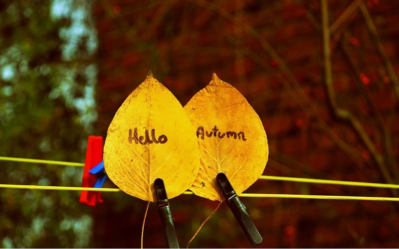 Autumnal wedding ideas 7